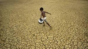Las tierras áridas acogen el 44% de los cultivos y el 50% del ganado del mundo