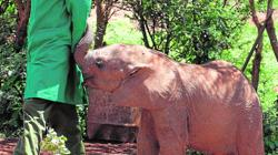 Los elefantes se alimentan y dan baños de barro cada mañana