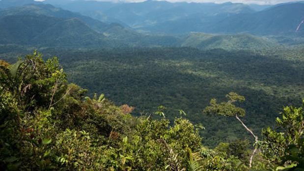 Bosque del Parque Nacional Yanachaga-Chemillén (Perú)