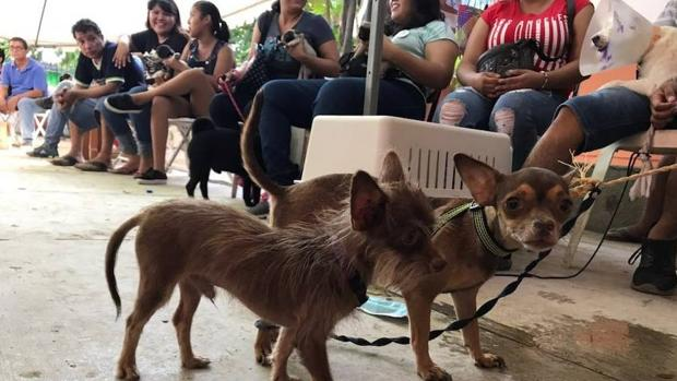 Cientos de personas fueron a Juchitán desde otras partes de México para curar a sus animales ytras el terremoto de gran magnitud que sucedió en Oaxaca hace dos semanas