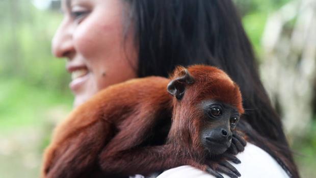 La Isla de los Monos es accesible por lancha solo en los momentos en que la corriente del río Amazonas lo permite
