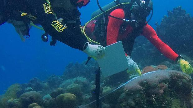 La isla colombiana de San Andrés siembra corales para restaurar sus arrecifes