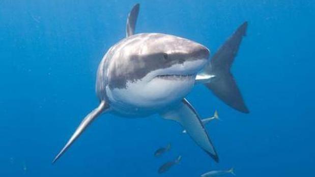 Marrakech acoge la reunión anual de la Comisión Internacional para la Conservación del Atún Atlántico