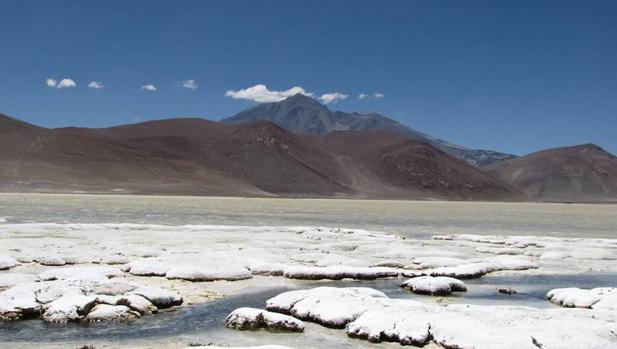 Los microorganismos son responsables de la precipitación de minerales en las lagunas andinas