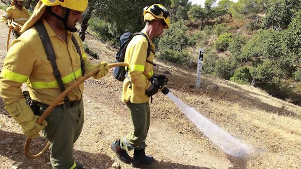 El Gobierno portugués prohíbe replantar con eucalipto zonas ardidas en incendios forestales que antes ocupaban otras especies arbóreas