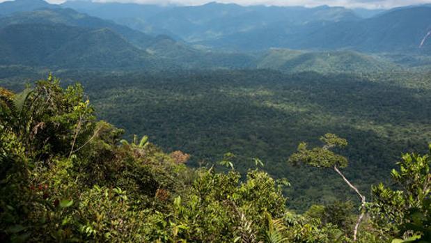 Los bosques inundados del Amazonas emiten tanto metano como todos los océanos del mundo