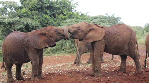 La Reserva del Niassa es la mayor área de conservación de Mozambique