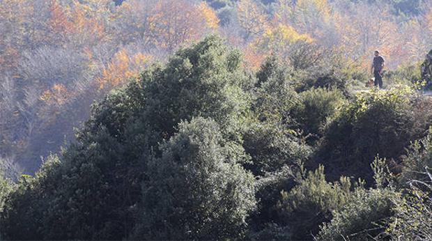 Un bosque de hayas con poca hoja en segundo término y un encinar en primer plano en el parque natural del Montseny