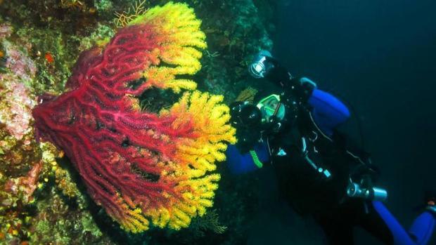 La actividad humana está alterando de forma drástica y acelerada los ecosistemas marinos está