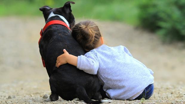 Consejos para el cuidado de mascotas