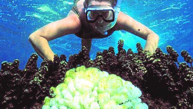 El aumento de CO2 también está provocando problemas en aguas dulces