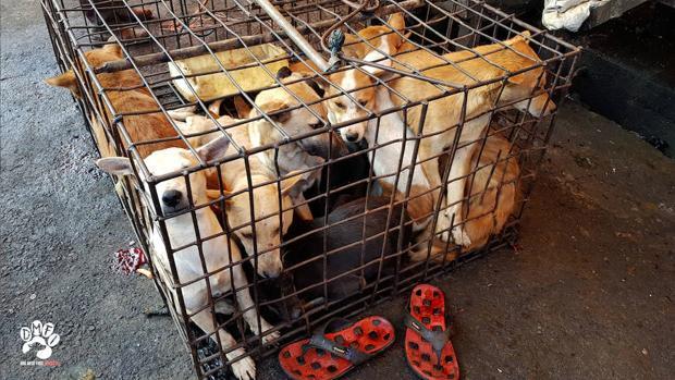 Piden a Indonesia que clausure los «macabros» mercados de animales vivos
