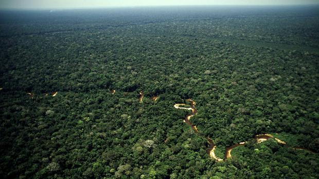 La minería ilegal se ha convertido en la mayor amenaza para la Amazonia peruana, denuncia WWF