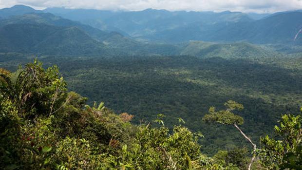 La ONU condena el asesinato de la activista indígena Guadalupe Campanur en México