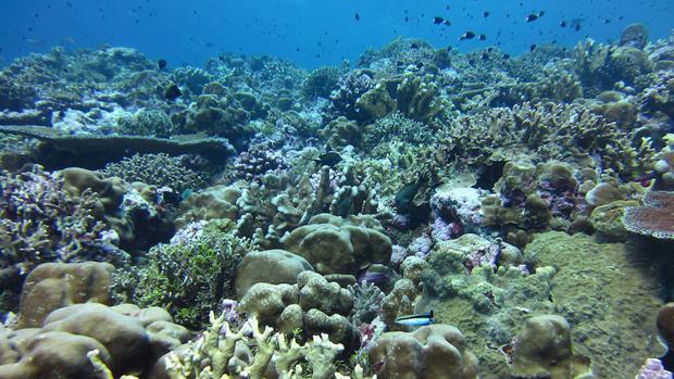 La acidificación de los océanos dificultar que los corales construyan sus esqueletos