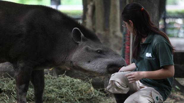 Entrenadores para animales, claves en el cambio de paradigma de los zoos