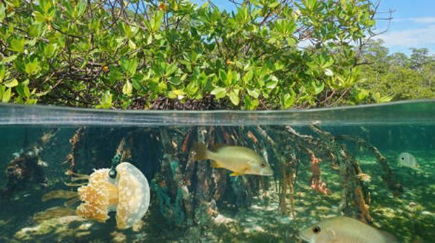 Las mujeres abanderan la conservación de los manglares en Nigeria