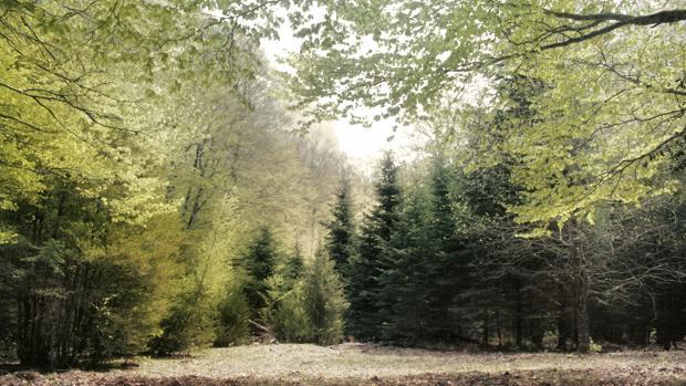 La caída de árboles peligrosos se puede prevenir