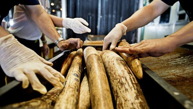 Taiwán prohibirá su comercio interno de marfil en 2020