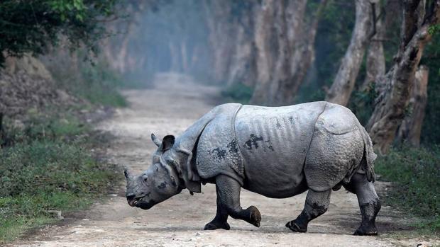 Nepal registra un año sin eventos de furtivismo