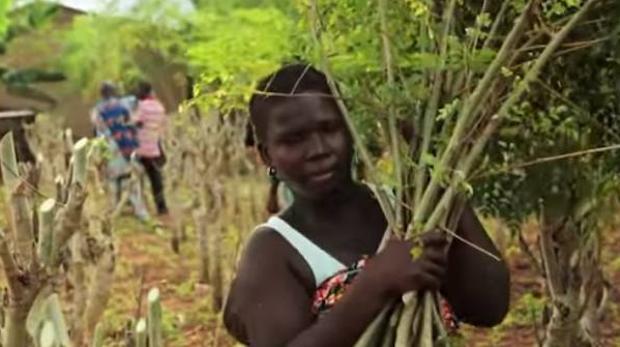 El poder de la moringa: salud, dinero y reforestación