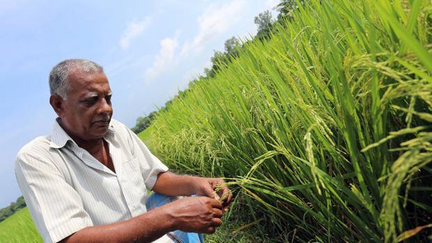 Identifican 195 cultivos indígenas capaces de mejorar la nutrición a nivel mundial