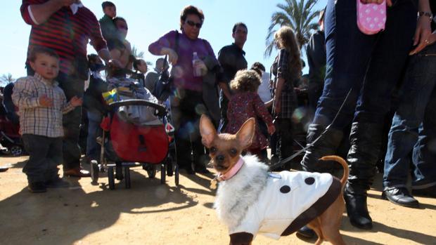 La Romería de San Antón está dedicada al patrón de los animales