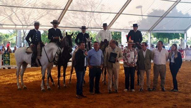 Concurso Morfológico de Pura Raza Española que se celebra en el municipio sevillano de La Campana
