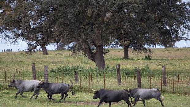 Visita a la ganadería Partido de Resina