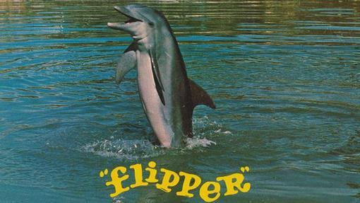 Uno de los delfines hembras que interpretaban a Flipper