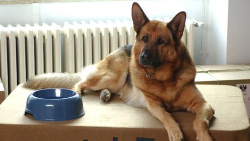 Rex, el miembro más valiente de la policía de Viena