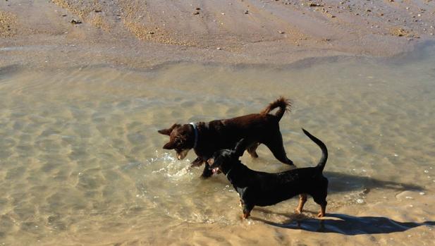 Cavada valora la playa canina, aunque se puede «mejorar»