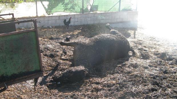 Incendia su propia finca en Bornos y acaba con la vida de un caballo