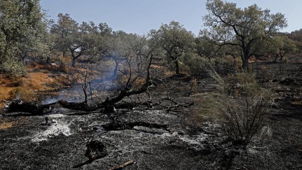 Zona afectada por el incendio del Castillo de las Guardas