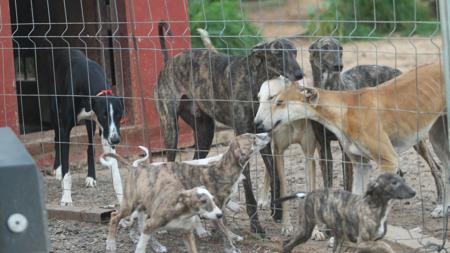 Algunos galgueros usan búnkeres para evitar el robo de sus perros