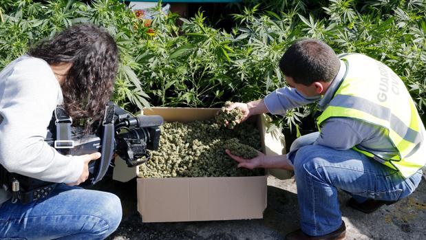 Un agente de la Guardia Civil en una plantación de marihuana