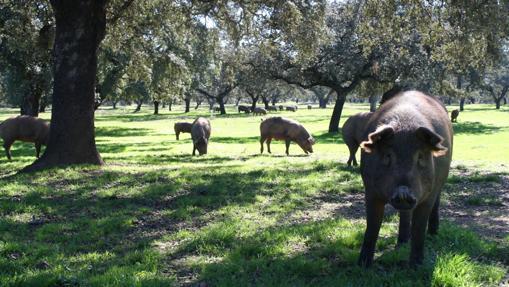 Pueblos de la provincia de Sevilla que debes visitar este fin de semana otoñal