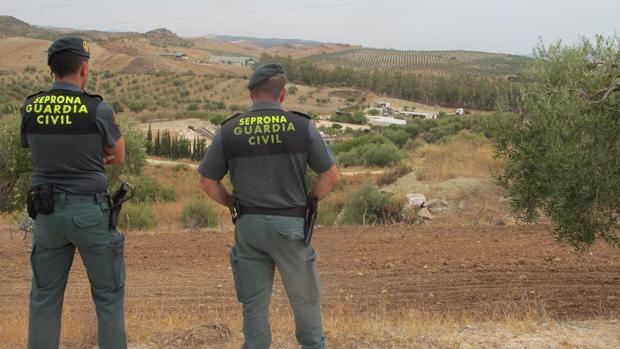 Agentes de la Guardia Civil en el paraje donde se ha localizado la urbanización ilegal