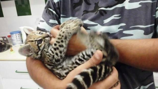 Infozoos recoge firmas para el cierre del zoo de Castellar por «peligroso» para animales y visitantes