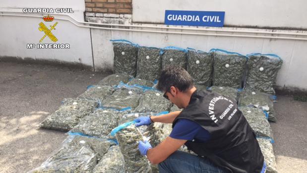 La Guardia Civil ha localizado 102 kilos de marihuana en Los Palacios