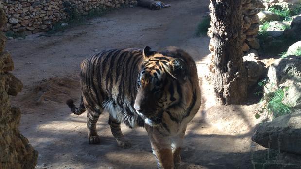 El Proyecto Gran Simio también denuncia al zoo de Castellar