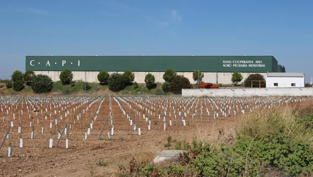 La Capì se mudó en 2003 a sus nuevas instalalciones en la carretera Écija-Fuente Palmera