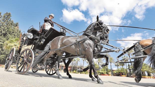 Los mejores enganches y carruajes españoles se dan cita este fin de semana en Salteras