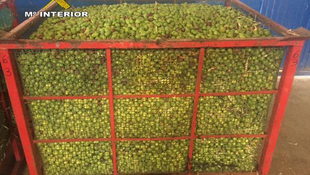 Un depósito con parte de los 16.885 kilos de aceitunas incautados por la Guardia Civil