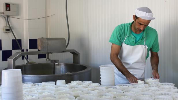 Antonio Félix Hernández elabora cada mañana dos tipos de quesos: fresco y curado