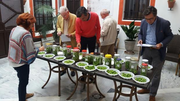 Los jueces de Osuna examinan las primereas muestras de aceitunas