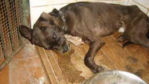Juzgan por presunto maltrato animal a los responsables de la perrera de Puerto Real