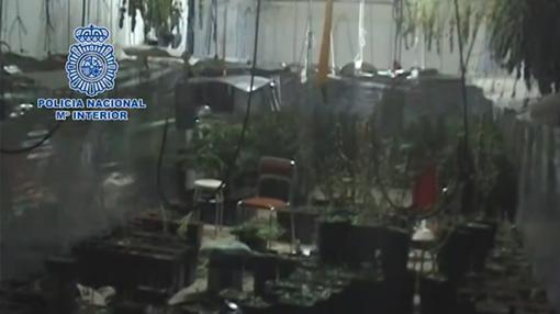 Una de las dependencias usadas para el cultivo y recolección de marihuana
