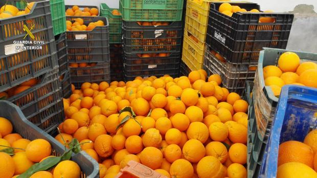 Imagen de archivo de una partida de naranjas localizada por la Guardia Civil