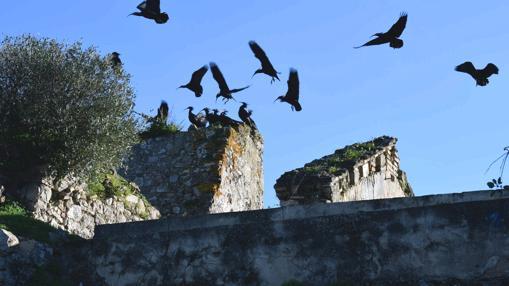 Ibis emeritas sobrevuelan la ermita.